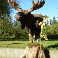 Floor pedestal Moose